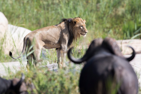 Home to the Big Five