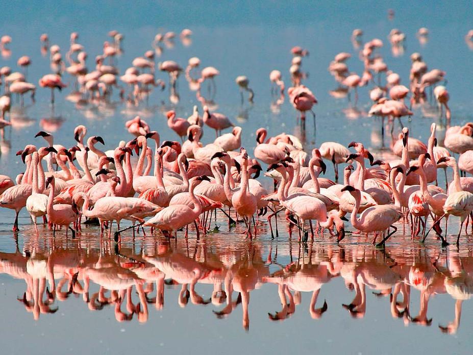 Lake Manyara - seasonal breeding ground of flamingos