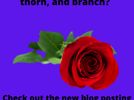 What is your rose, bud, thorn, and branch?