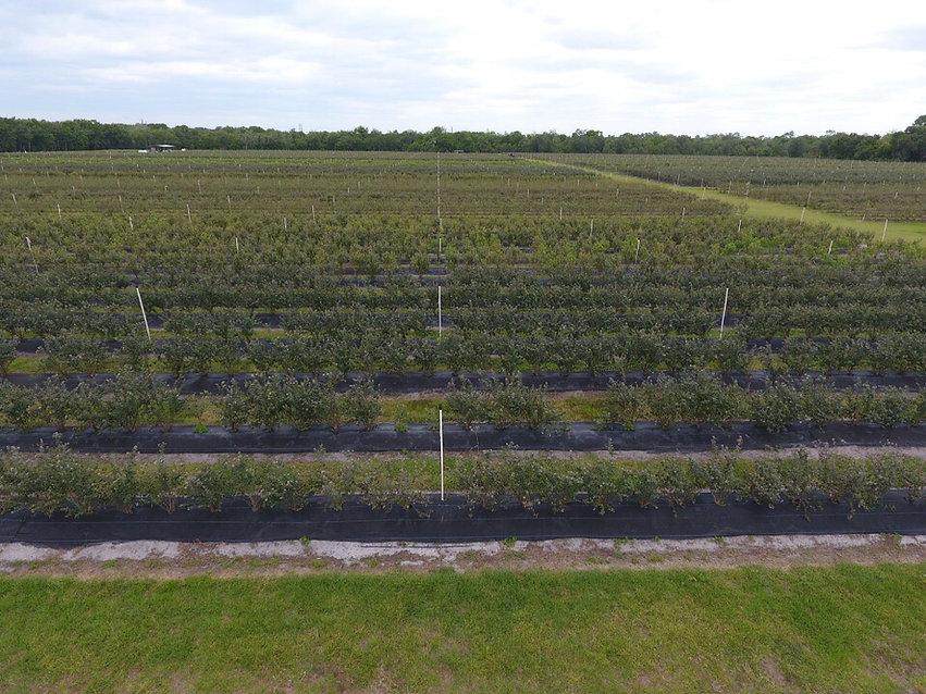 Field Aerial 4.11.17.jpg