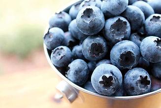blueberrybucketSM.jpg
