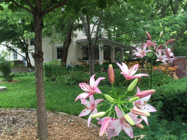 flowerashram.jpg