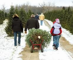 Cut-Your-Own Fresh Christmas Trees in Southern New Hampshire's Monadnock Region