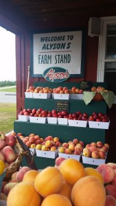 View of Alyson's Orchard's farm stand with shelves full of baskets of fresh ripe fruit
