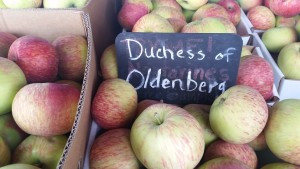 Early heirloom apple vaiety called Dutchess of Oldenberg - a light green apple with red striping and blushLight green