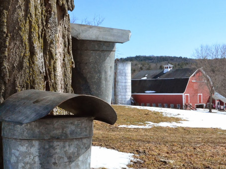 Experience New Hampshire's Maple Syrup Season at its Best!