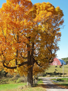 Top Things to Do While Visiting Walpole in New Hampshire's Monadnock Region This Fall