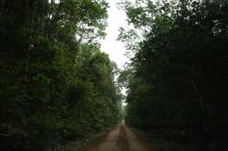 Floresta Amazônica virgem é cortada por estrada construída pelo governo de Ivo Cassol até a sua faze