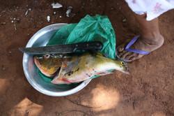 Maura Wajuru limpando peixe