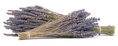 lavenderbunches_400.jpg