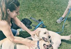 Kirsten training Labradors