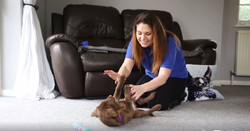 Kirsten playing with Labrador