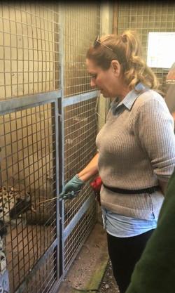 Kirsten training Leopard
