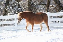 lavalla winter walk 2.JPG