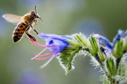 Helping Honeybees Survive with WIlliam Hesbach