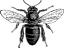 wing-dance-bee-black-logo.png