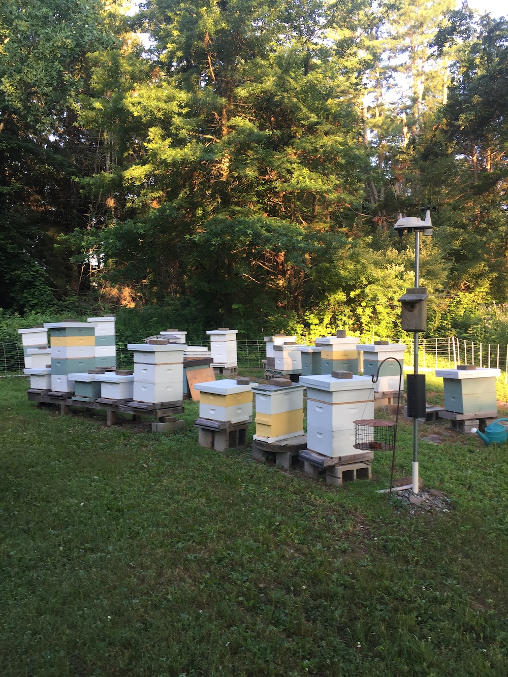 wing-dance-apiary-hives