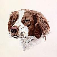 "Watercolor - Brittany Spaniel - 14""x14"""