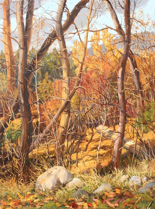 Autumn at Deep Creek