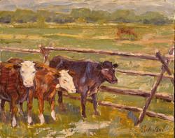 Kohrs Cows  (39).jpg
