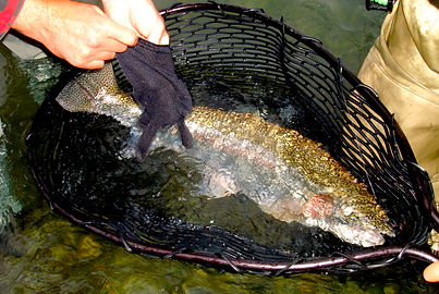alaska raibow trout fishing