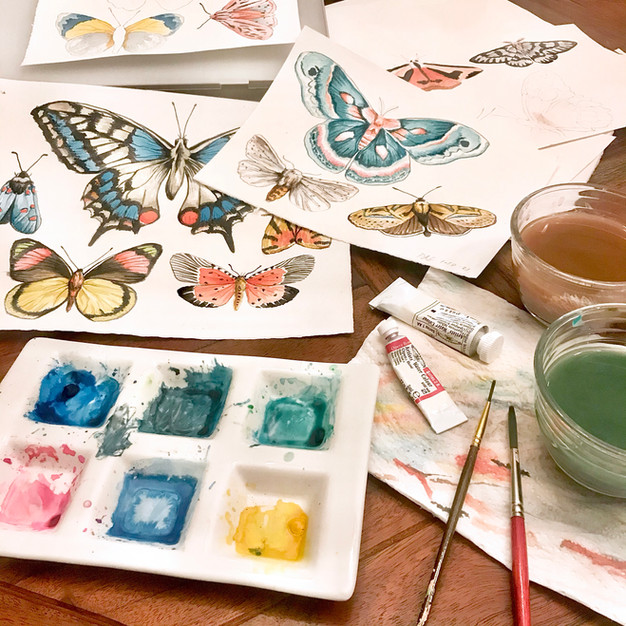Watercolor moths and butterflies