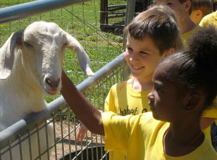 Kids with Sheep.jpg