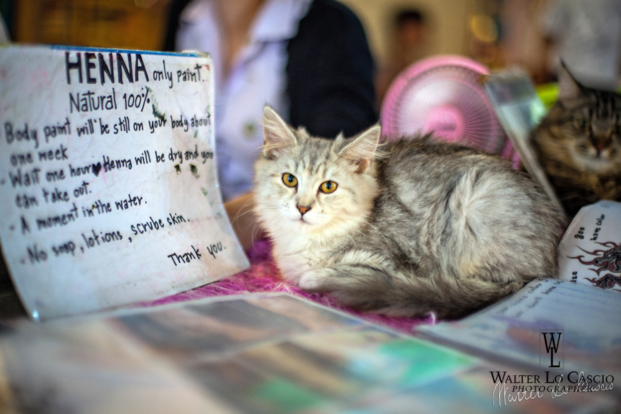 thailandia-2014_15410591262_o.jpg