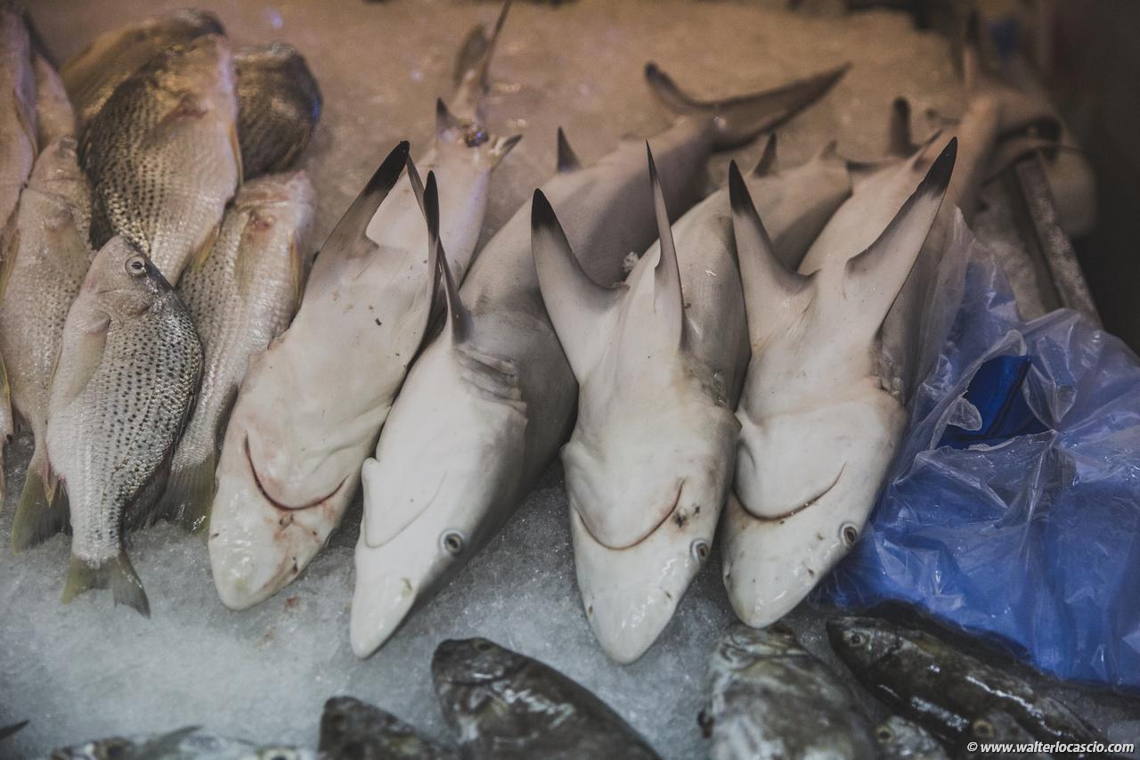 Abu_Dhabi_fish_market (33)