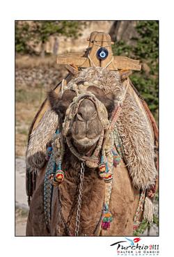 turchia-2011-cappadocia_6176063218_o.jpg