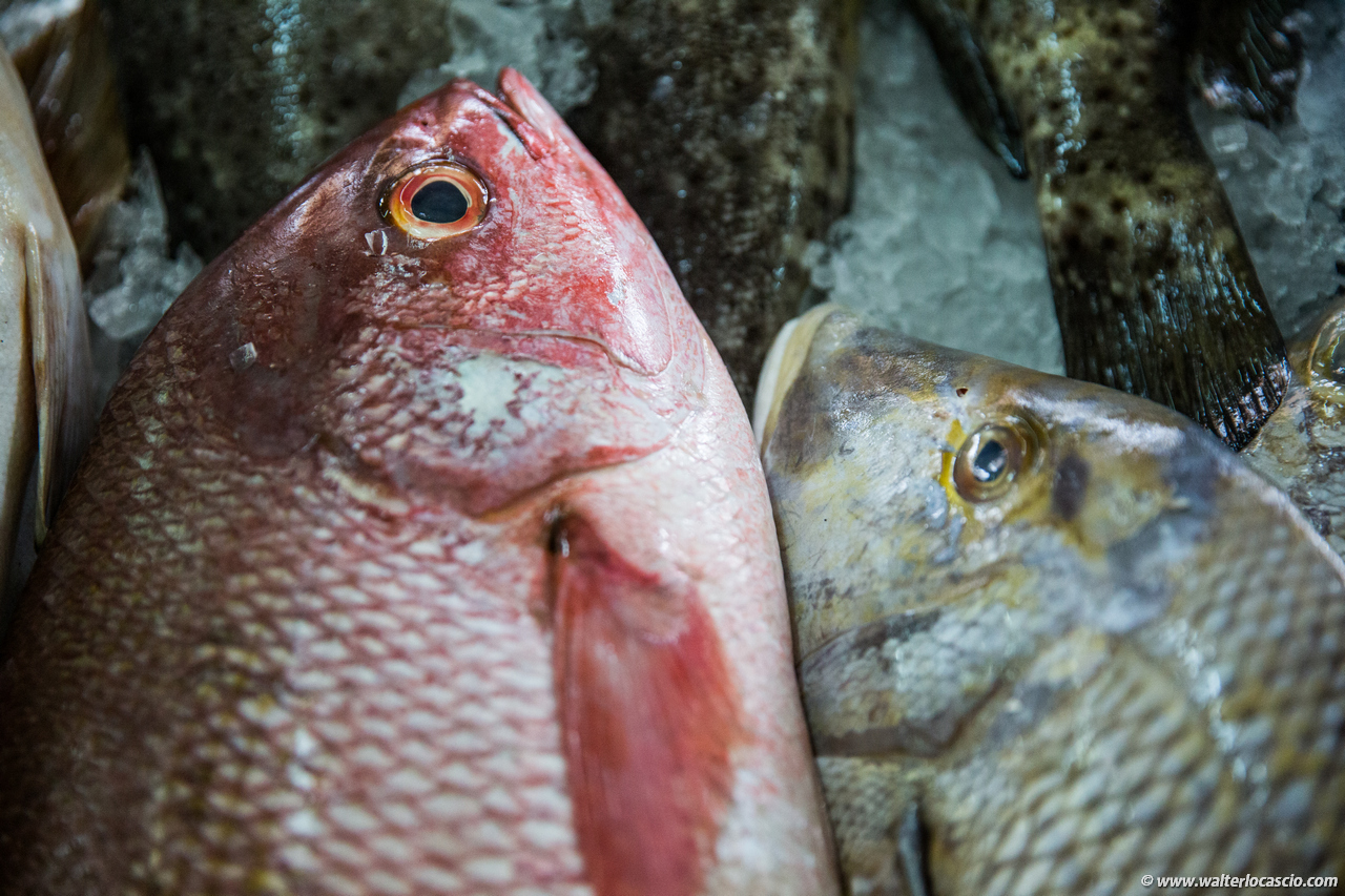 Abu_Dhabi_fish_market (45)