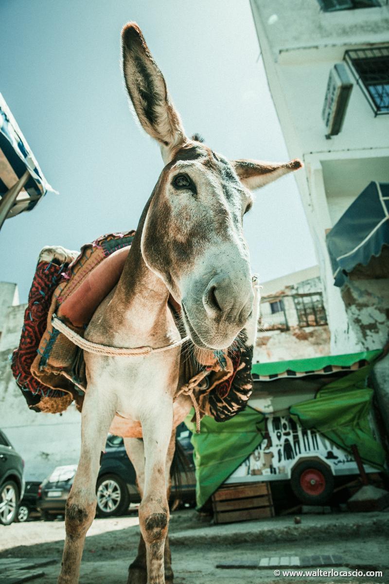 Marocco_MOULAY_DRISS_ZERHOUN _IMG_3512