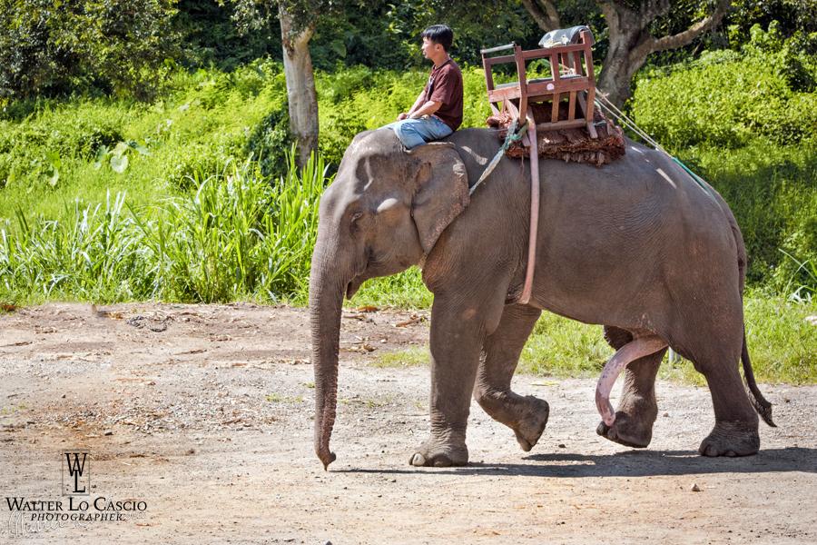 thailandia-2014_15327984326_o.jpg