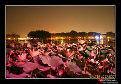 beijing---pechino_4080225156_o.jpg