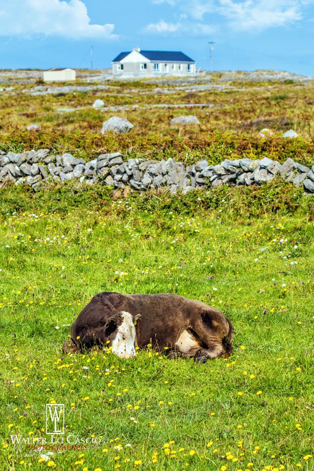 irlanda-2015-isole-aran-inis-mr_21612489792_o.jpg