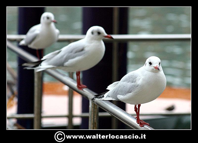 venezia_2862432783_o.jpg