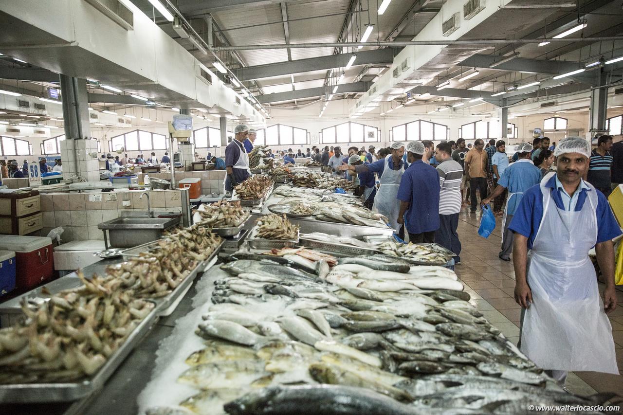 Abu_Dhabi_fish_market (26)