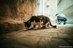 Marocco_Fes_IMG_3935