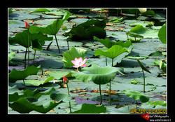 beijing---pechino_4079440285_o.jpg