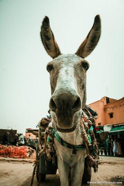 Marocco_Marrakech_IMG_5084