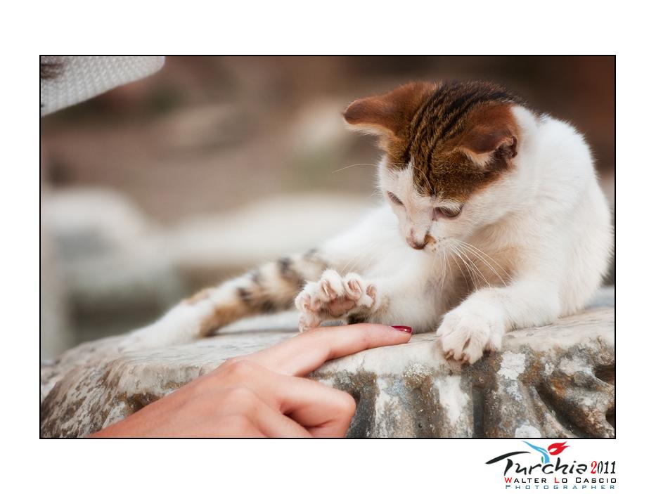 turchia-2011-efeso_6175935790_o.jpg