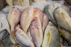 Abu_Dhabi_fish_market (19)