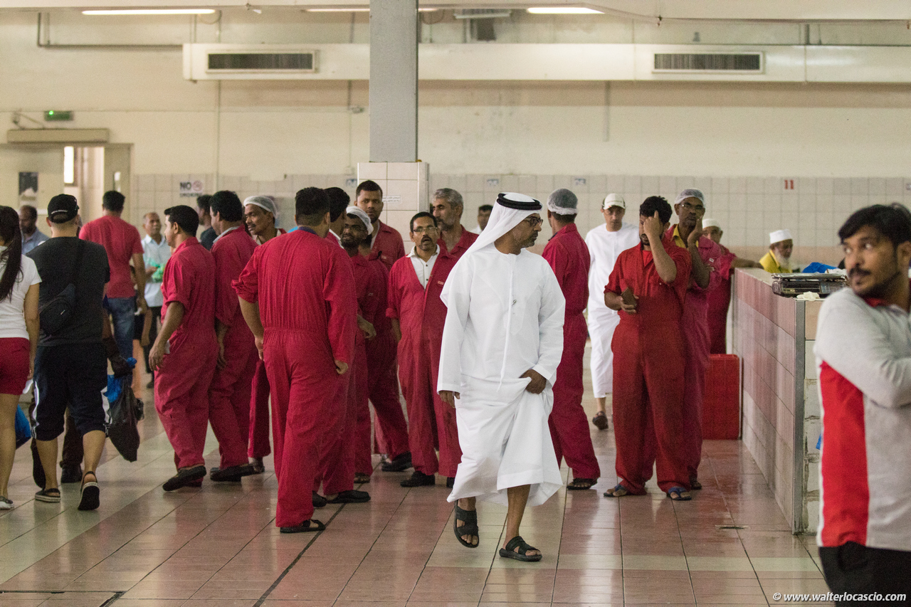 Abu_Dhabi_fish_market (7)