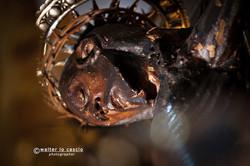 venerd-santo-a-caltanissetta-2012_7058019181_o.jpg