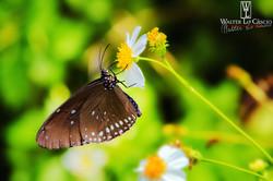 thailandia-2014_15351021495_o.jpg