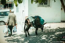 Marocco_MOULAY_DRISS_ZERHOUN _IMG_3699
