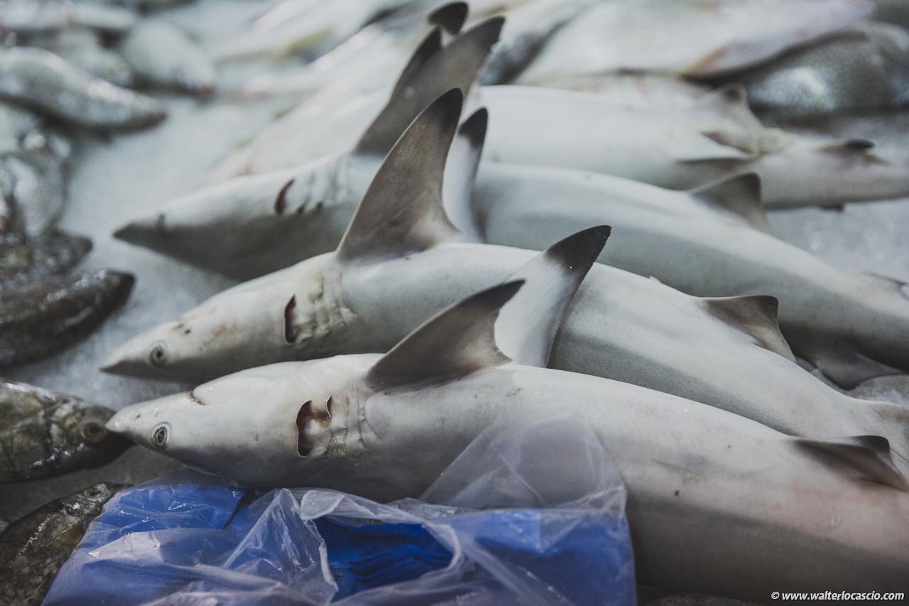Abu_Dhabi_fish_market (32)