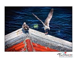 turchia-2011-istanbul_6175579025_o.jpg