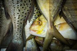Abu_Dhabi_fish_market (20)