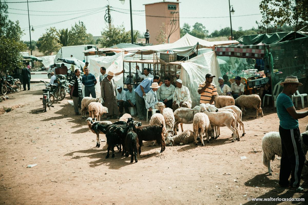 Marocco_Aghmat_Mercato_IMG_5448